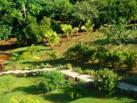 The garden at Clearwater Paradise Resort